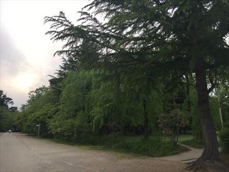 弘前公園と弘前城2